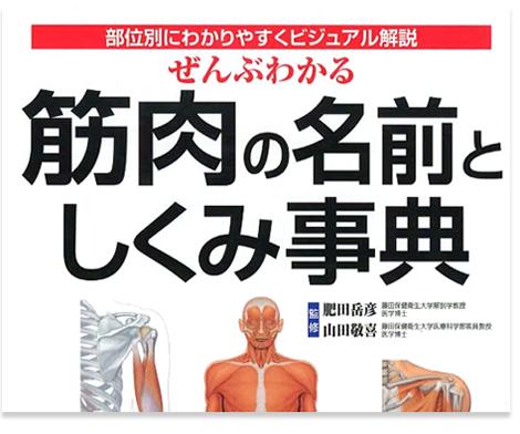 筋肉を部位別にわかりやすくリアルにビジュアル解説
